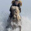 Pferde am Ostseestrand 2017
